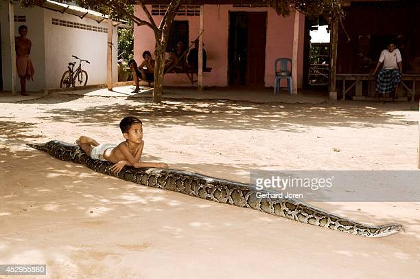 Sambath Uon rides on his pet Chamreun a 6meter long 120kg female python The snake is about 6 years old first arrived to the house when the boy was 3...