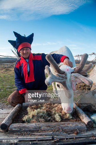 Sami native Nils with reindeer