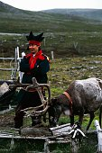 Sami shepherd with reindeer Mageroya island Nordkapp Finnmark county Norway