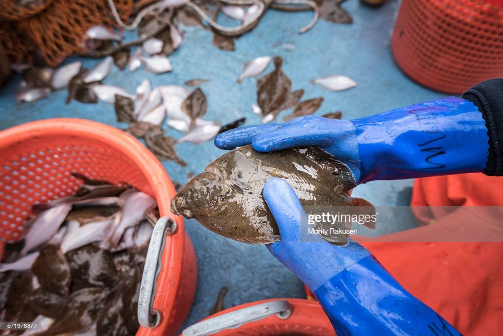 Sample catch of fish on research ship