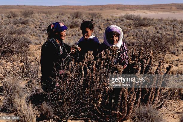 A San grandmother Ouma Una and Ouma Kais introduce young Lola to Hoodia a cactus plant traditionally eaten by the Bushmen to eliminate hunger and...