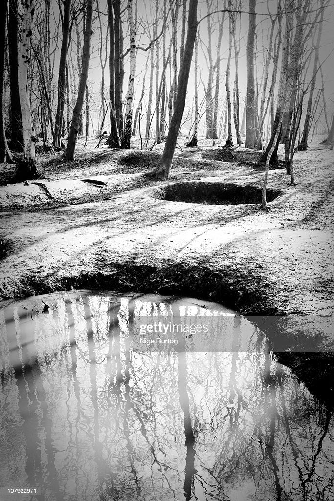 Sanctuary Wood, Belgium : Stock Photo