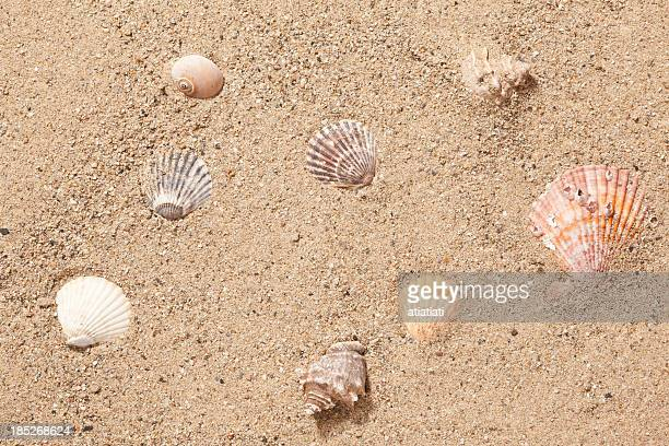 sand and sea shells