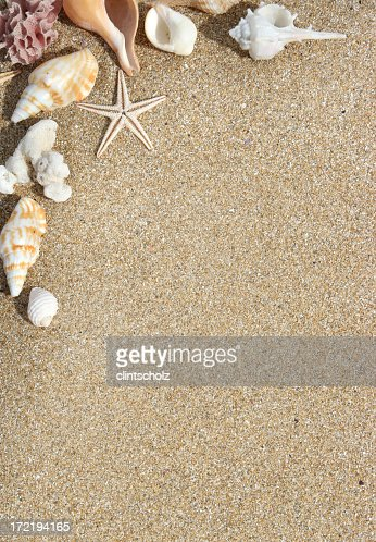 Sand colored background with assorted shells in the corner