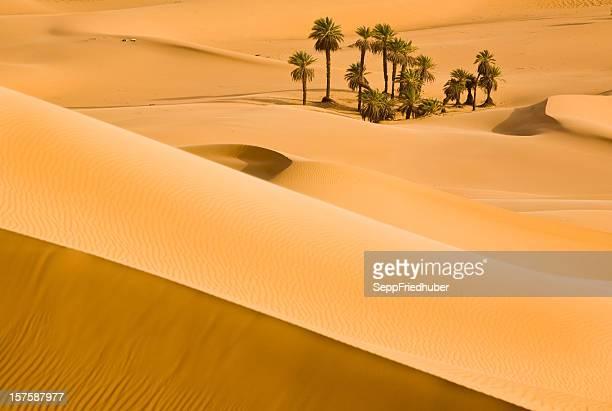 砂丘から光と影のサハラ