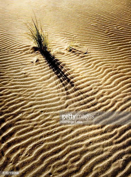 Sand dune in Cabo de Gata Natural Park