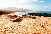 Sand dune of Bolonia beach, province Cadiz, Andalucia, Spine