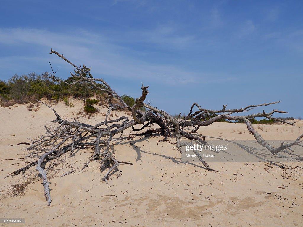 Sand Dune-Jockey's Ridge State Park