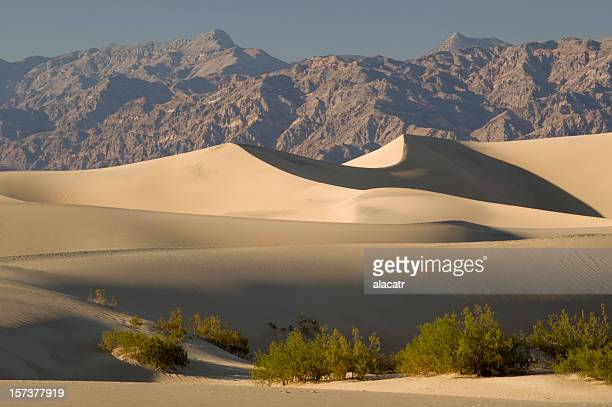 Sand dunes and Mesquite in Death Valley