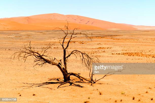 Sand dunes and withered tree, Namibia
