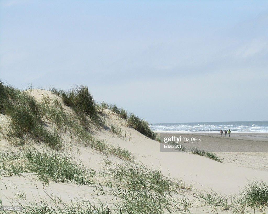 Sand Dunes Belgian Coast : Stock Photo