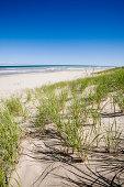 'Sand Dunes, Grass and Lake'