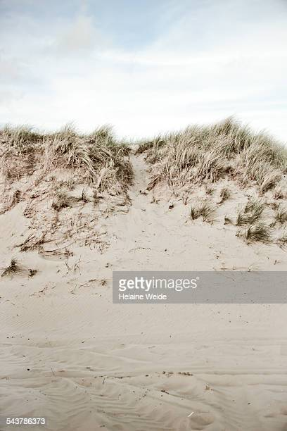 Sand dunes on a stormy day in Holland