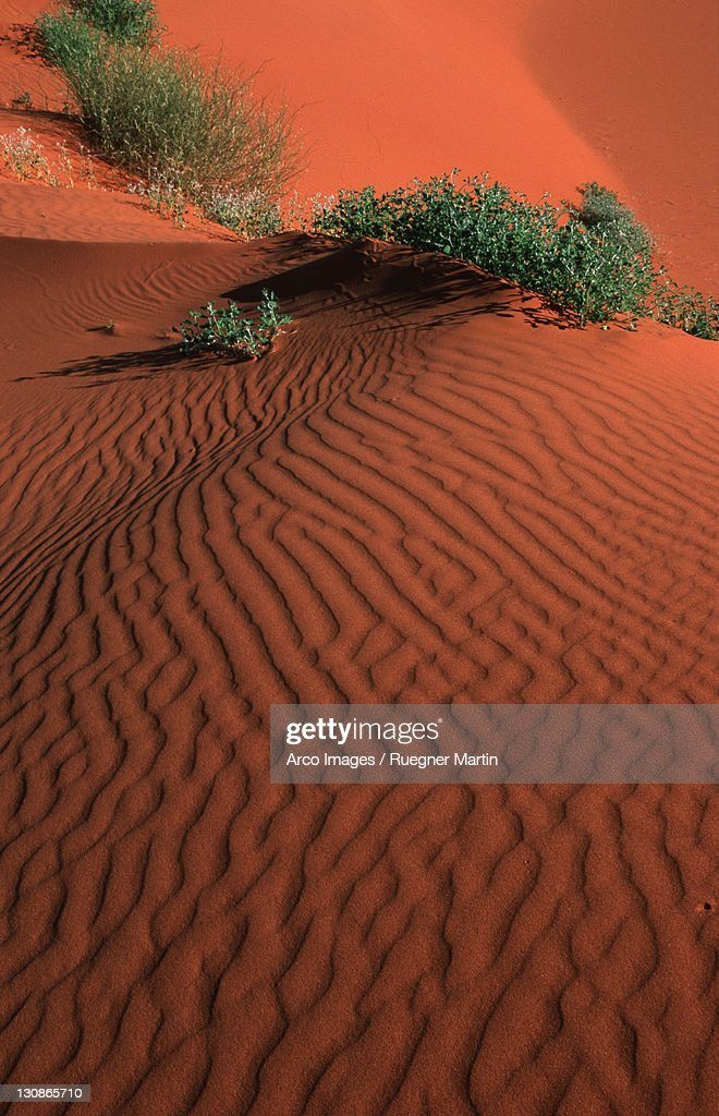 Strzelecki Australia  city photos gallery : Sand Dunes, Strzelecki Desert, South Australia