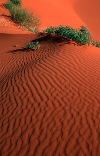 Strzelecki Australia  City new picture : Sand Dunes, Strzelecki Desert, South Australia