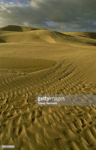 sand dunes with ripples: afternoon, scenic,  te paki, new zealand