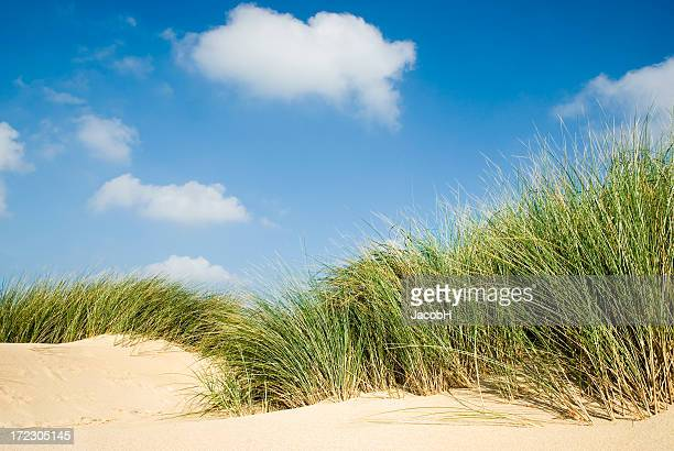 Sand, Grass and Sky