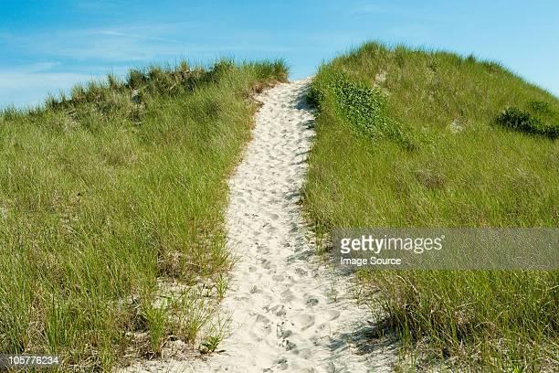 Sand path over dune, Montauk, Long Island