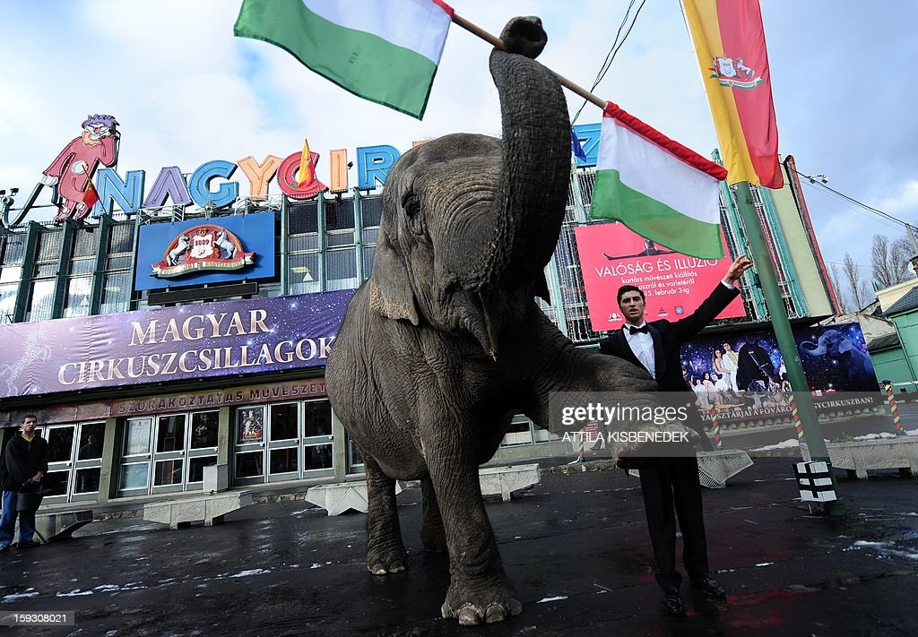 Sandra, the elephant of the Grand Circus of Budapest, poses with its trainer for a presentation in front of the circus building in Budapest on January 11, 2013 after a rehearsal of a new production, title the 'Hungarian circus stars'. The premiere will be held on January 12.