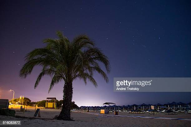 Sandy beach at night with palm tree on the foreground, Cyprus