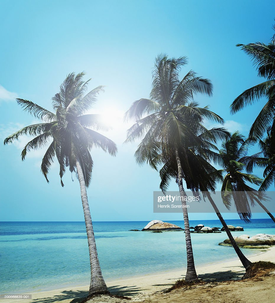 Sandy beach with palm trees and small rocks in sea : Stock Photo