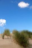 Sandy dunes with Marram grass on blue sky