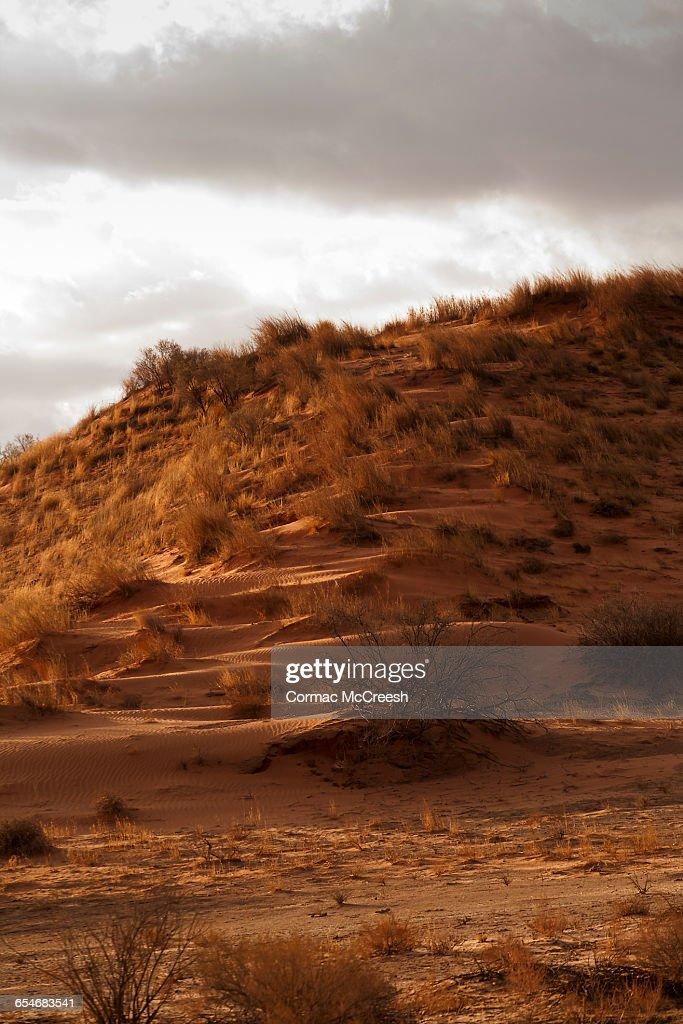 Sandy hillock, Kgalagadi Transfrontier Park