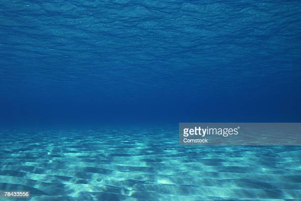 Sandy ocean floor , Great Barrier Reef , Australia