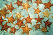 Sandy seabed covered by Cushion sea stars in the Caribbean sea