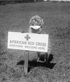Sandy the American Red Cross Dog Welcomes Everyone