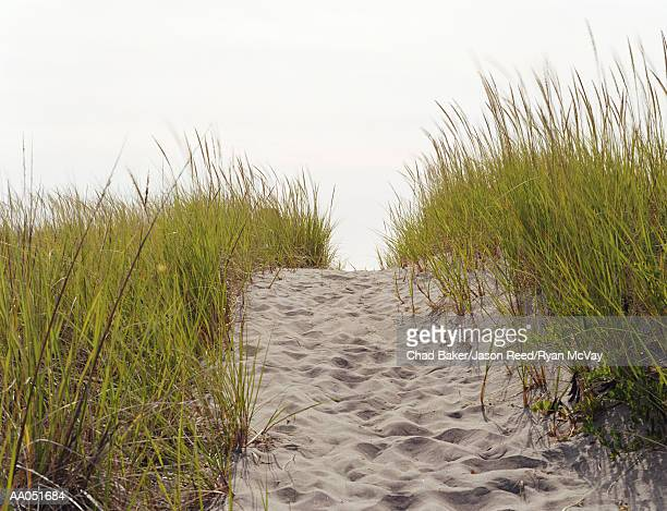 Sandy trail surrounded by tall grass, Long Beach, Washington, USA