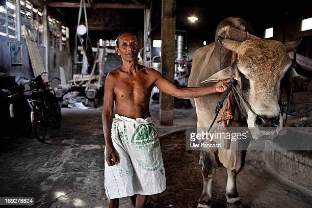 Sanen who has worked for 40 years at the mie lethek factory holds a cow's harness in Srandakan village Bantul on May 22 2013 in Yogyakarta Indonesia...