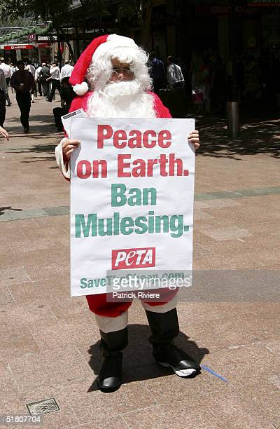 Santa Claus asks shoppers to leave Merinos wool on the shelves this Christmas during a 'Peta' protest at the Pitt Street mall December 1 2004 in...