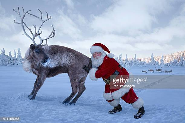 Santa Claus pushing a stubborn reindeer