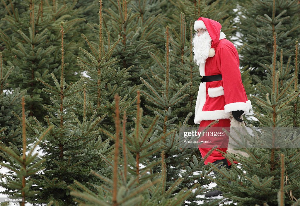 santa claus walks through a christmas tree farm on december 12 2010 in mellensee near - German Christmas Tree