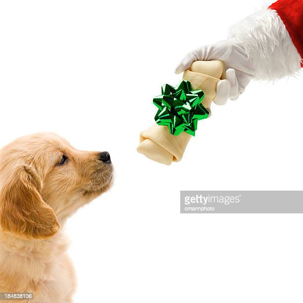 Santa giving a wrapped bone to puppy
