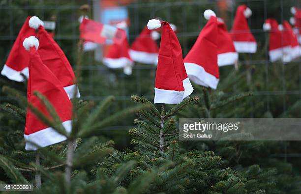 Santa hats decorate Christmas trees on display at an outdoor Christmas tree market on November 20 2013 in Berlin Germany With Christmas still over a...