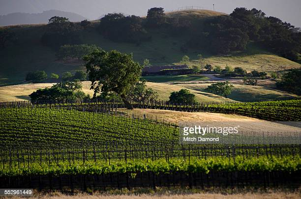 Santa Ynez vineyard country