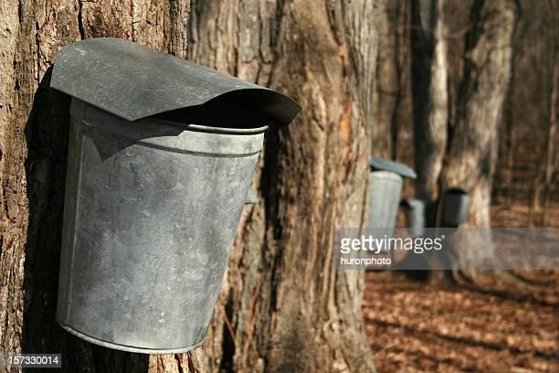 sap bucket