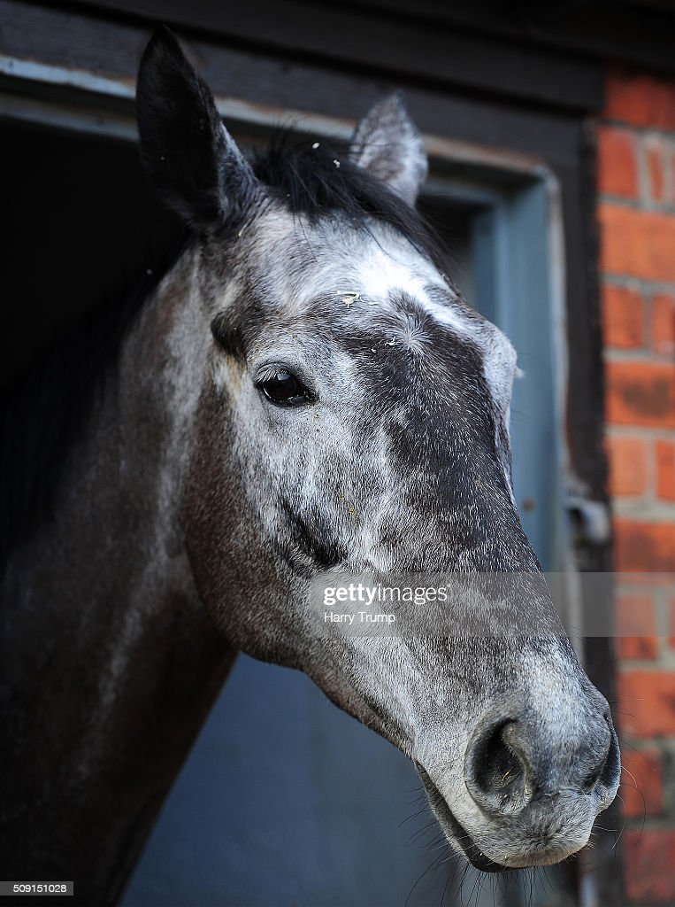 Saphir De Reu at Manor Farm Stables on February 9, 2016 in Ditcheat, England.