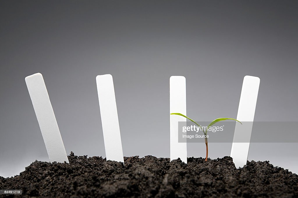 Sapling with blank labels : Stock Photo