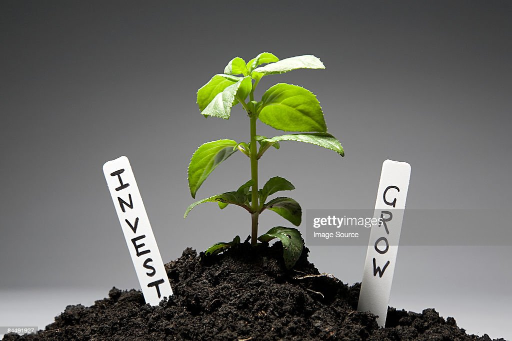 Sapling with investment labels : Stock Photo