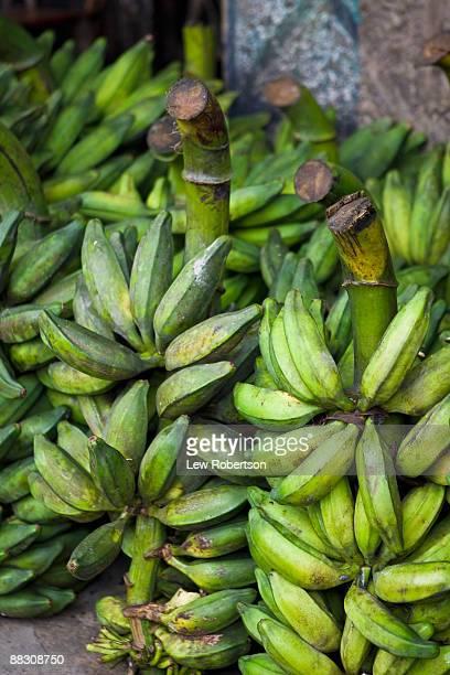 Sapo plantana or frog bananas