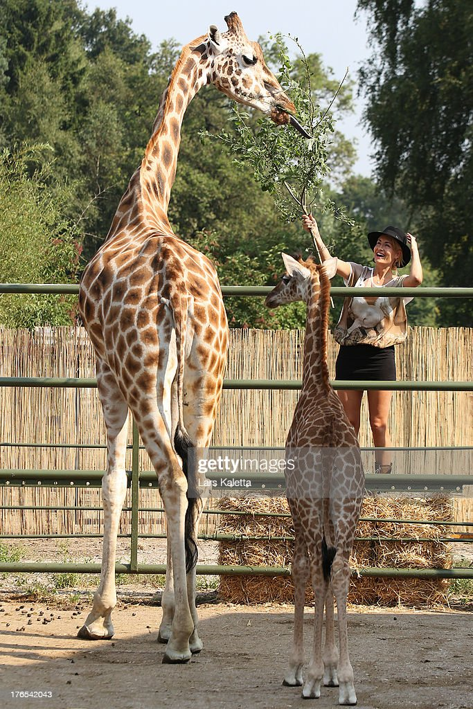 <a gi-track='captionPersonalityLinkClicked' href=/galleries/search?phrase=Sarah+Connor&family=editorial&specificpeople=220670 ng-click='$event.stopPropagation()'>Sarah Connor</a> feeds a giraffe at Serengeti Park on August 15, 2013 in Hodenhagen, Germany.