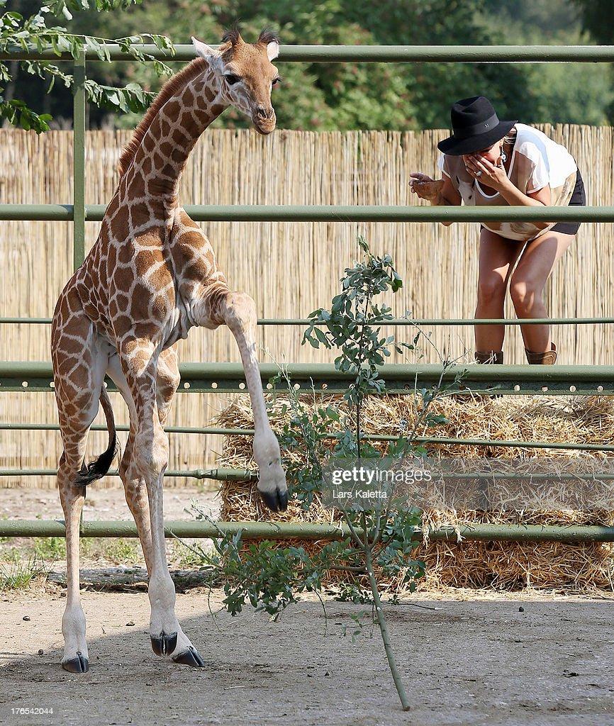Sarah Connor laughs after christening a baby giraffe named Kerstin at Serengeti Park on August 15, 2013 in Hodenhagen, Germany.