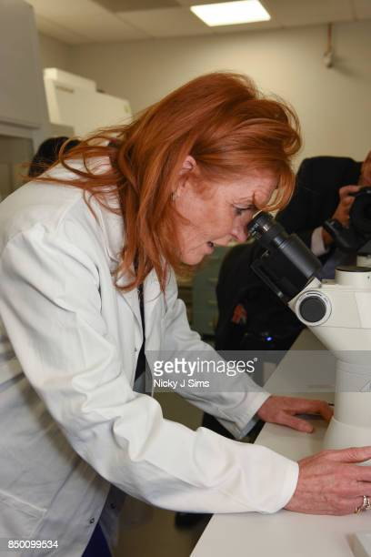 Sarah Ferguson The Duchess of York is appointed as an official ambassador of The British Heart Foundation and takes a tour of the British Heart...