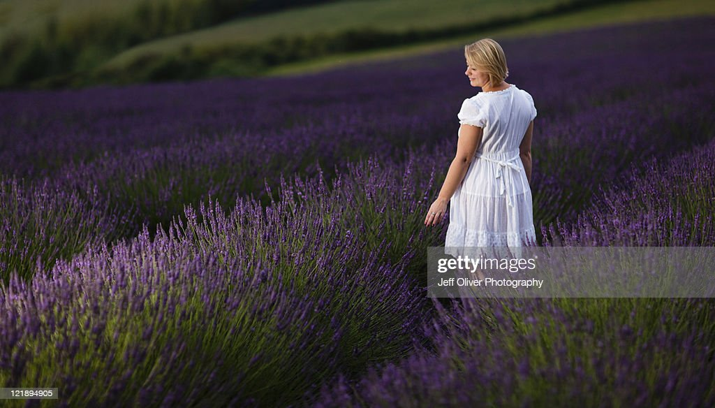 Sarah in Lavender field : Stock Photo