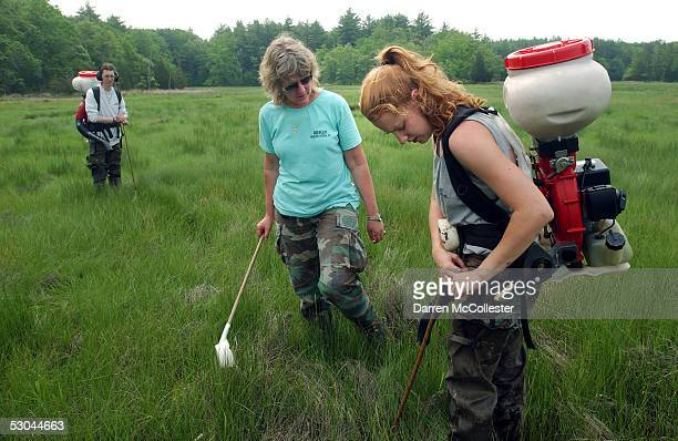 Sarah MacGregor owner of Dragon Mosquito Control speaks to employee Andrea Frey while fellow employee Devin Hanington looks on while spraying a swamp...