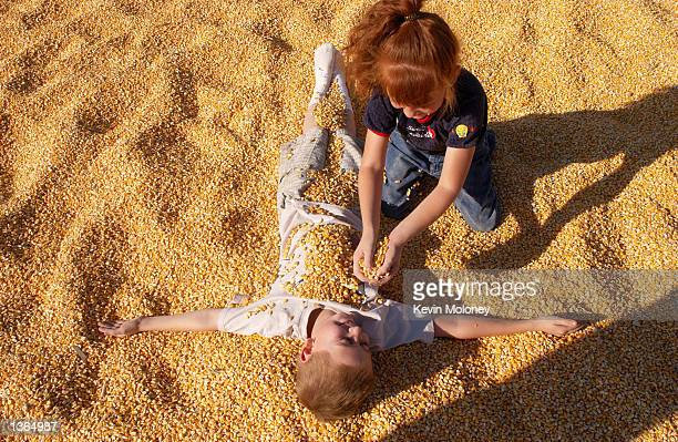 Sarah Orozco pours dried corn kernels atop brother Jesse in a corn kernel sand box outside 14acre corn maze September 2 2002 near LaSalle Colorado...