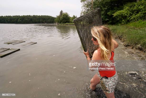 Sarah Wineburg carries an oyster bag out into the Damariscotta River in Damariscotta on Thursday June 29 2017